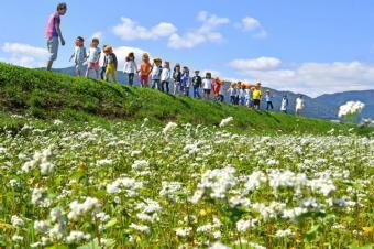 5091-340ソバの花.jpg