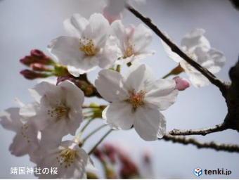 5351-340桜.jpg